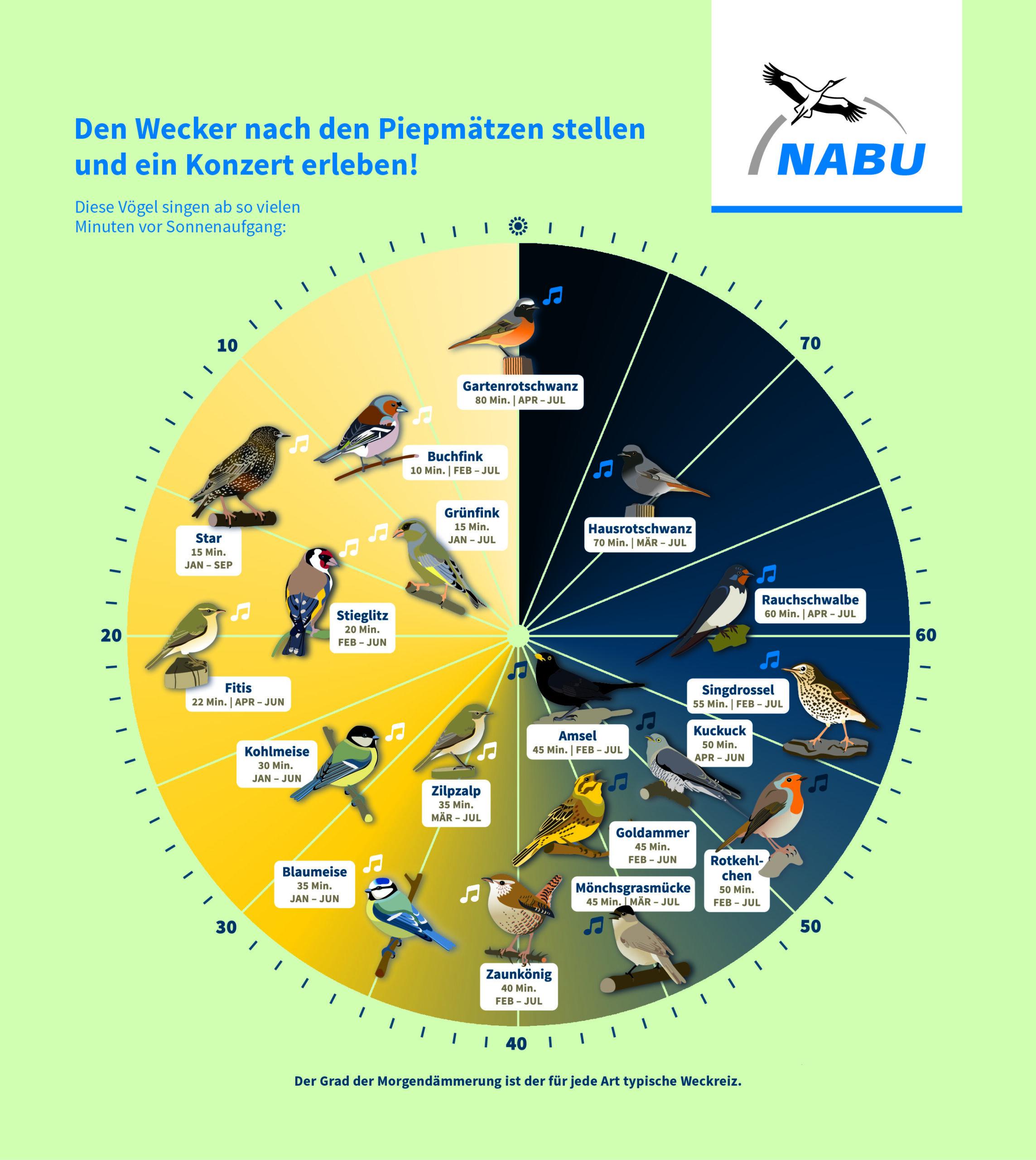 Интерактивная шкала пения птиц