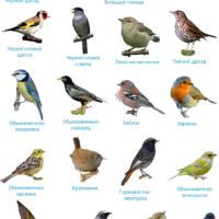 птицы наклейки русский